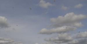 Drachenfest 14.10.2012 069